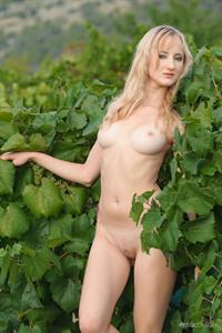 Zemira A: Wine Country 2 by Max Asolo
